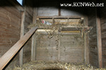 nest box and ramp inside chicken coop