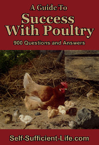 Success With Poultry