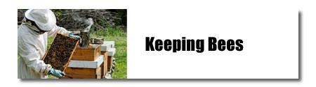 keepingbees2