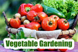 vegetablegardening