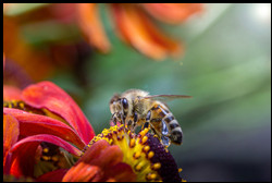 about-honey-bee-on-flower